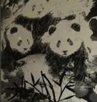 Panda v4